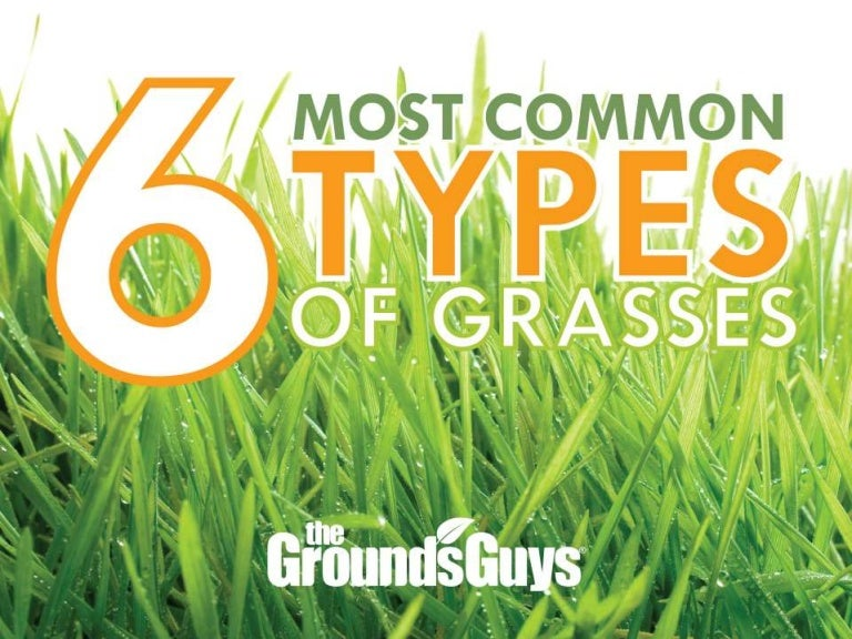 6 Most Common Types Of Grasses Tips From The Grounds Guys