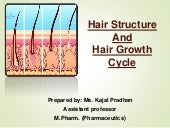 Hair sturcture and hair cycle