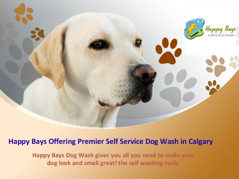 Happy bays offering premier self service dog wash in calgary happybaysdogwash 150221052520 conversion gate02 thumbnail 4gcb1424496580 solutioingenieria Images
