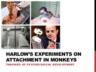 Psychology: Harlow's experiments on attachment in monkeys. by Janice Fung.