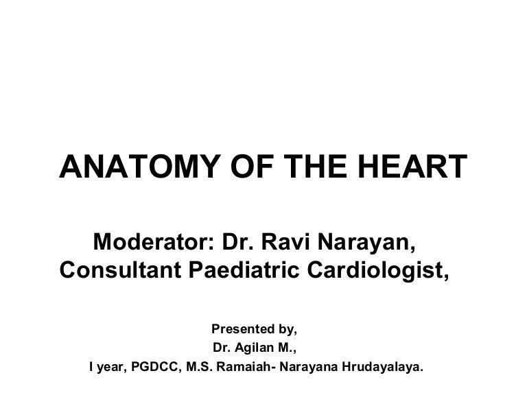 Heart anatomy written copy