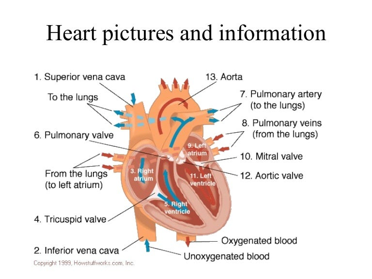 Heart Pictures Andinformation1