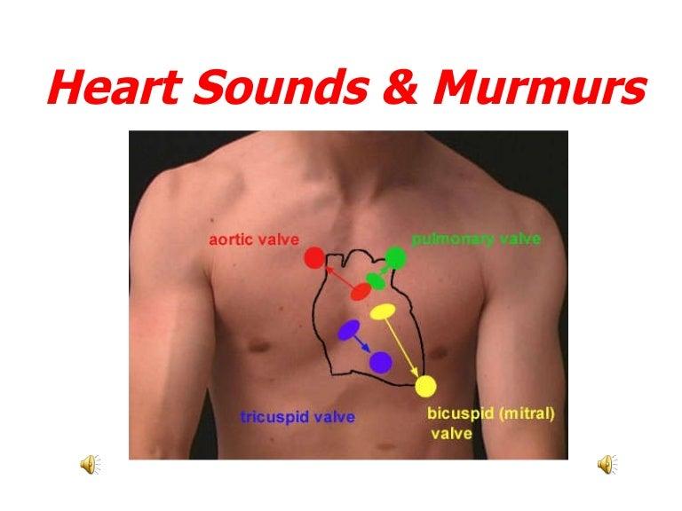 heartsoundsandmurmurs 100214075617 phpapp02 thumbnail 4