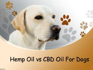 Hemp Oil vs CBD Oil For Dogs