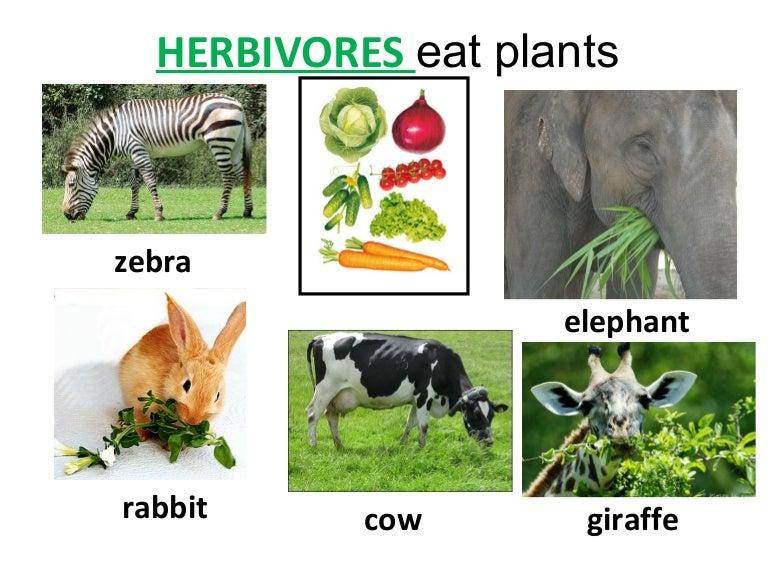 Herbivorescarnivores And Omnivores