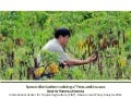 Herrera B - Spatial Epidemiology and Crop Pest and Diseases Mapping 2012
