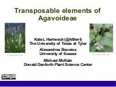 Transposable elements of Agavoideae