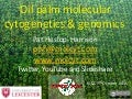 Chromosomes and molecular cytogenetics of oil palm: impact for breeding and genetics PIPOC
