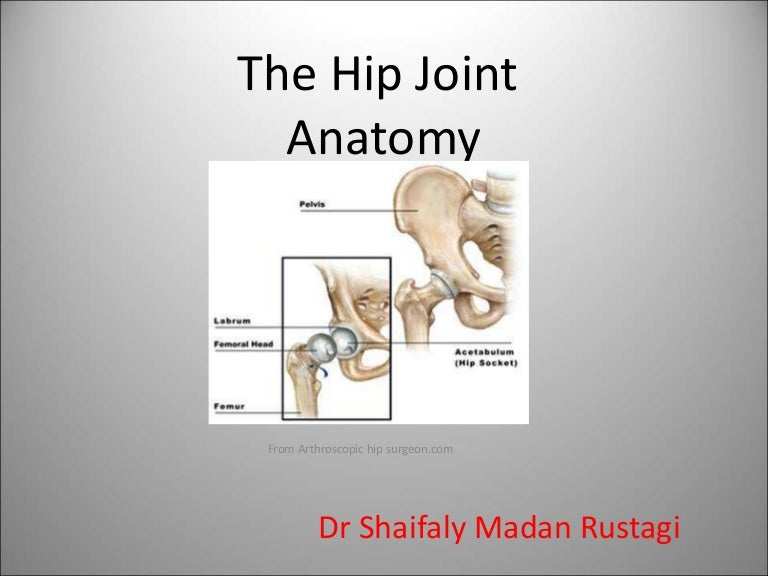 the gross antomy of the hip hoint and applied anatomy focused for und…