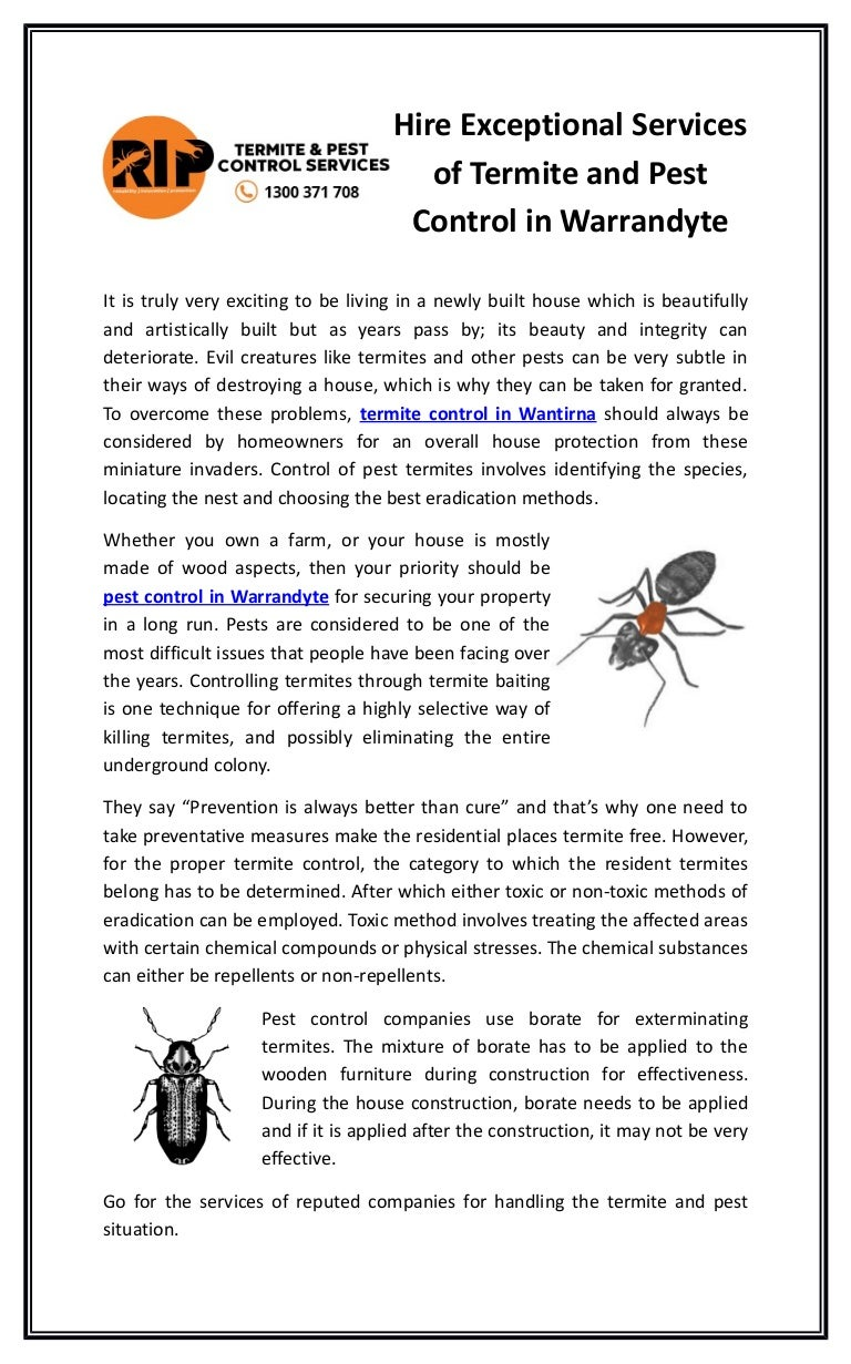 Hire Exceptional Services Of Termite And Pest Control In Warrandyte