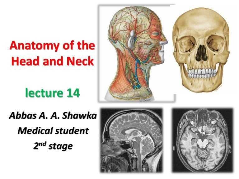 Head and Neck Anatomy 14