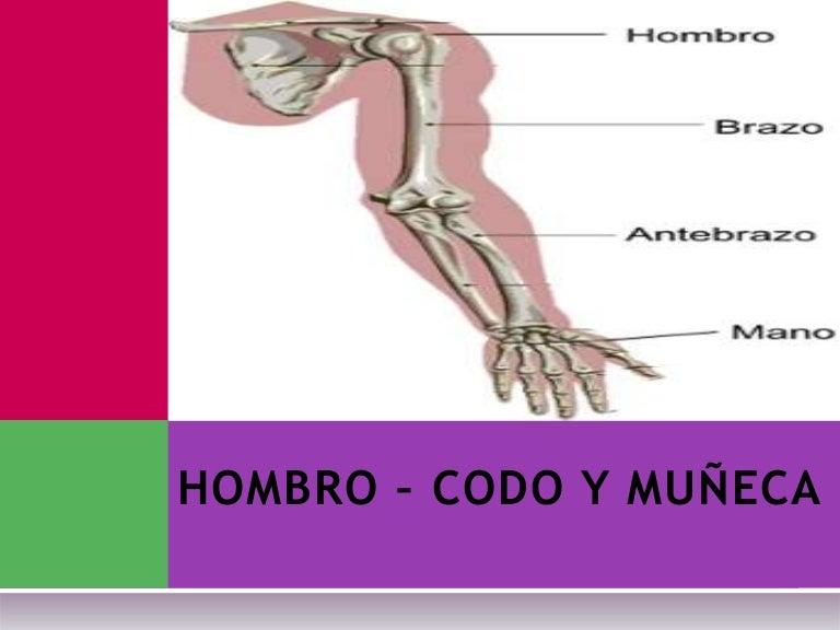 Atractivo Hombro Anatomía Conjunta Molde - Anatomía de Las ...