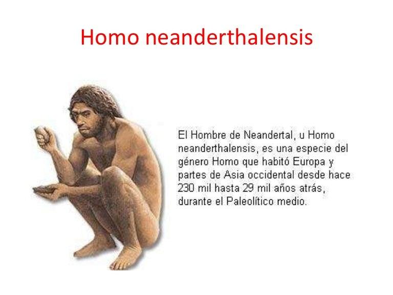 Q Significa Neanderthal Homo neanderthalensis