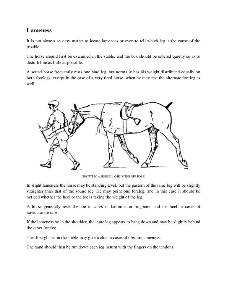 How To Detect Lameness In Horses