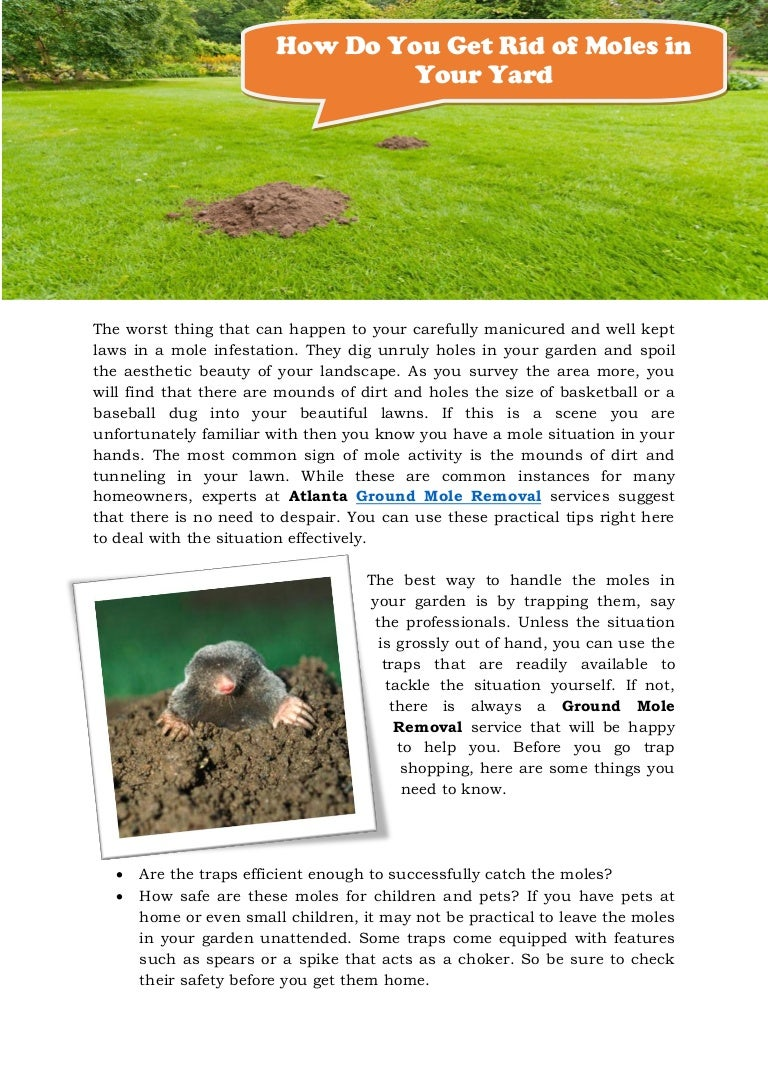 How to get rid of ground moles - How To Get Rid Of Ground Moles 55