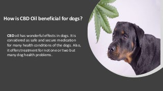 How Is Cbd Oil Beneficial For Dogs