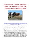 How to Farm Cattle Guidelines - What You Should Know If You Decide to Start Raising Cattle