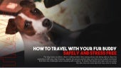 How To Travel With Your Fur Buddy Safely And Stress Free