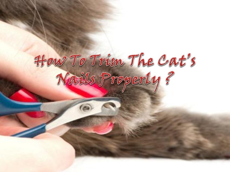 How To Trim The Cat\'s Nails Properly