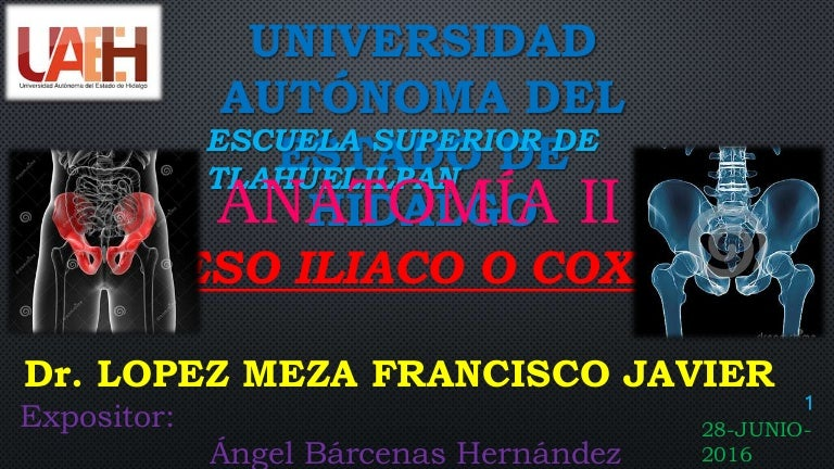 ANATOMIA DE HUESO COXAL