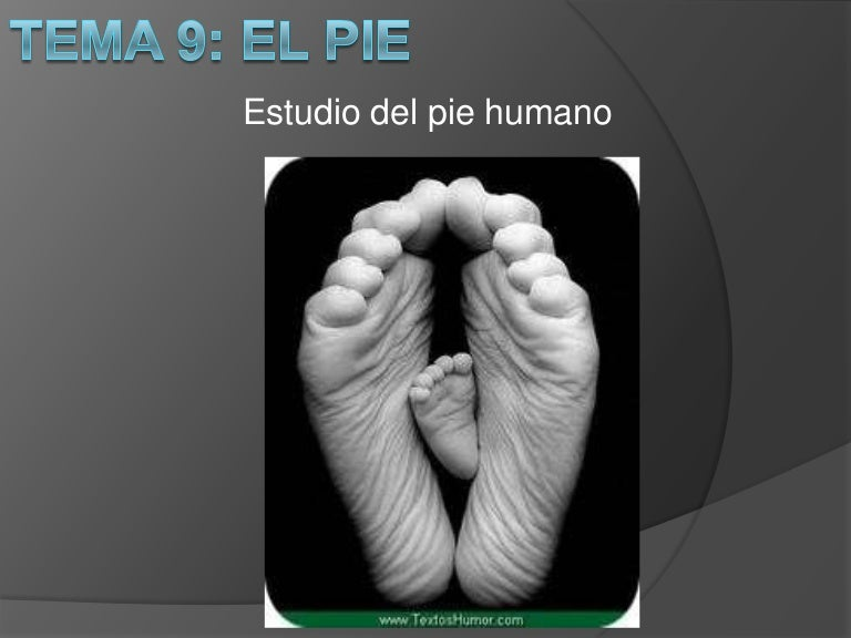Huesos del pie, Anatomia