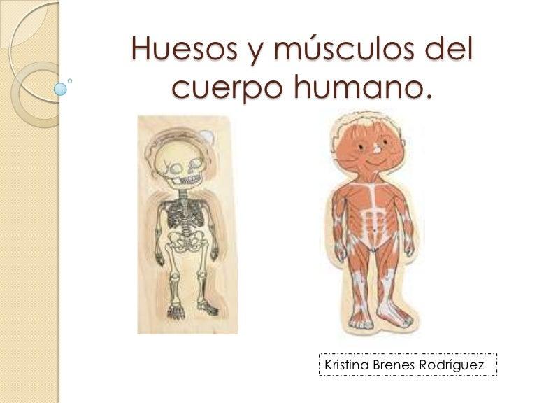 Huesos y msculos del cuerpo humano