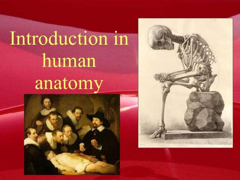 Human Anatomy 101