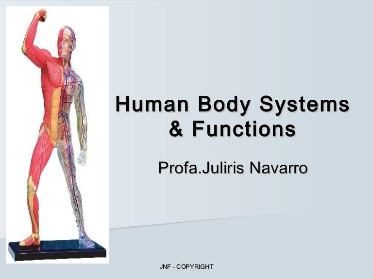 Human Body Systems Functions