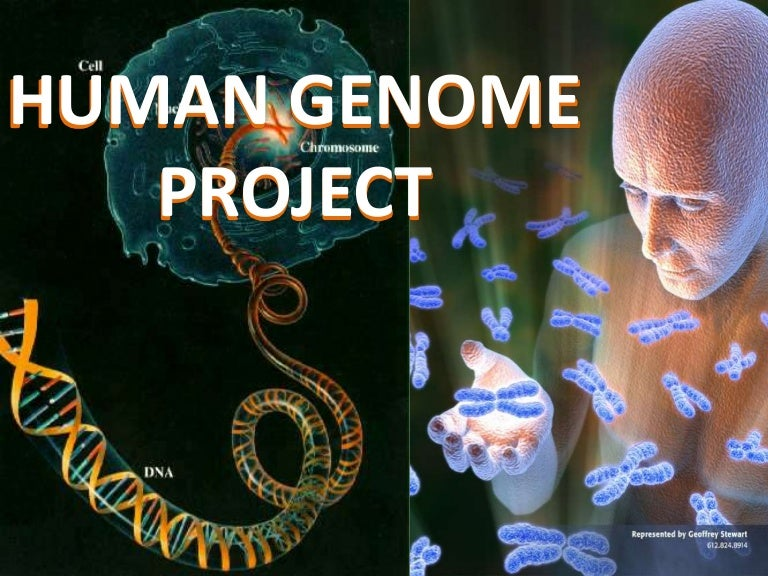 Ppt goals of the human genome project powerpoint presentation.