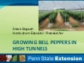 Growing Bell Peppers in High Tunnels, 2015