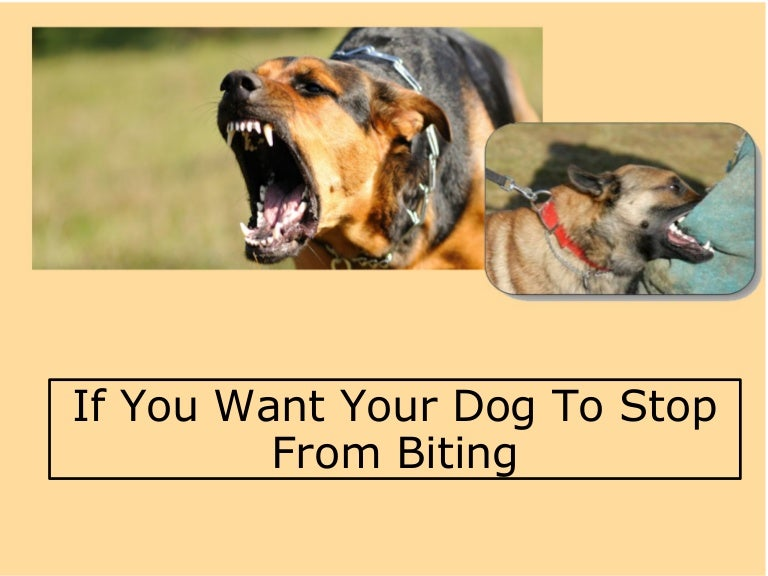 how to get dog to stop biting when playing
