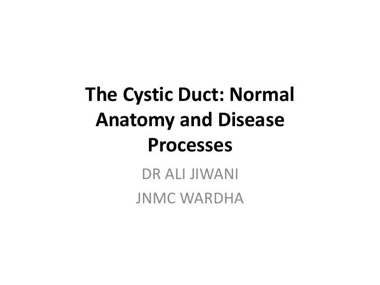 Imaging Of Cystic Duct