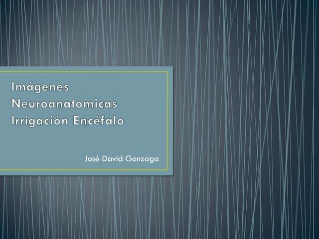 Imágenes neuroanatomicas irrigación encefalo