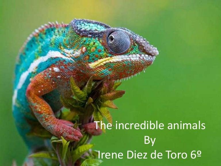 incredible animal
