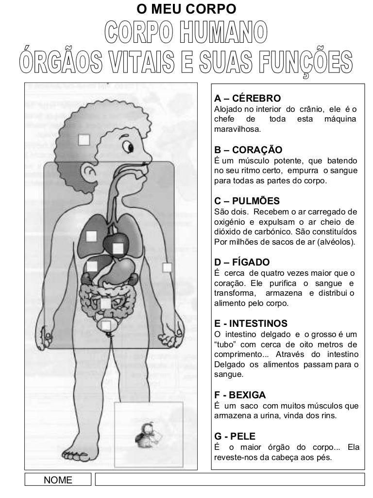 Corpo humano orgãos internos