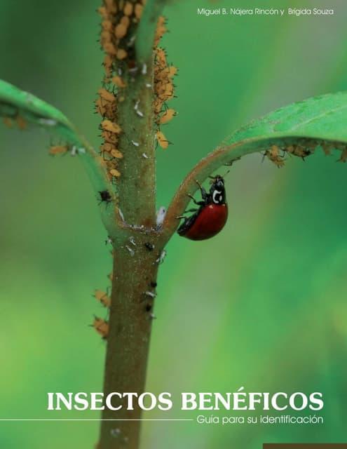 Insectos beneficos najeray_souza