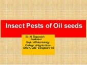 Insect pests of ground nut