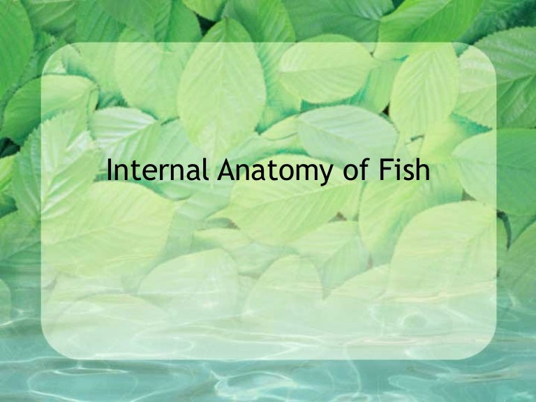 Internal anatomy of fish