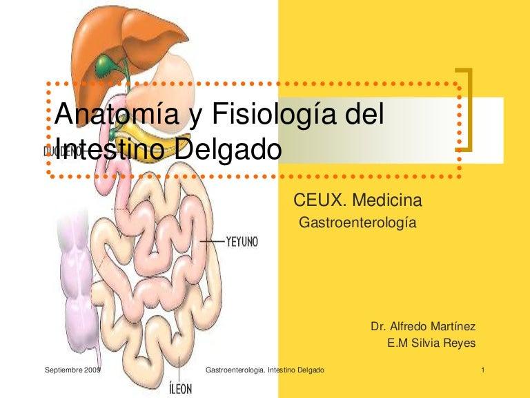 Intestino Delgado[1]