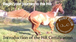 Introduction of the Pony Club HB