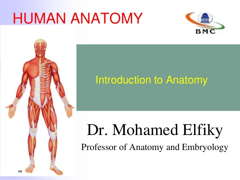 Introduction To Sectional Anatomy Gallery Human Body Anatomy