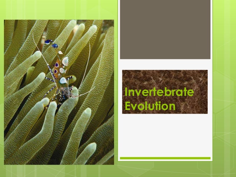 Invertebrateevolution 150330000536 Conversion Gate01 Thumbnail 4gcb1427673957