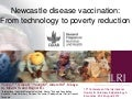 Newcastle disease vaccination: From technology to poverty reduction