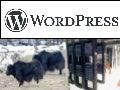 Jaki hosting pod wordpressa