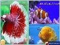Jalshrusti Aquatic Pets World