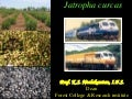 Jatropha Curcas Oil: Miracle Plant for Small Villages in India