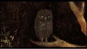 Jheronimus Bosch's Owls 1