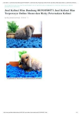 Jual kelinci hias bandung 081910500571 jual kelinci hias terpercaya online sheno dan rizky peternakan kelinci jual kelinci holland lop