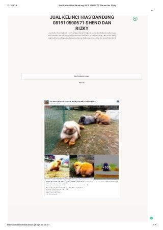 Jual kelinci hias bandung 081910500571 sheno dan rizky