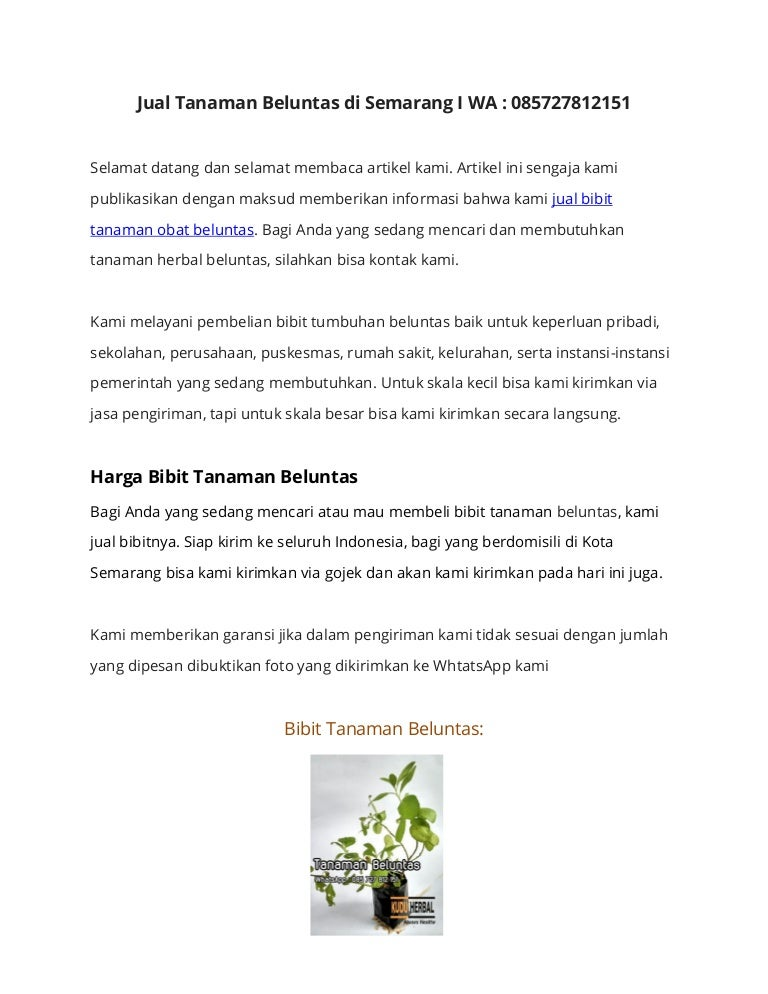 Penjual Tanaman Obat Beluntas Di Semarang I Wa 085727812151